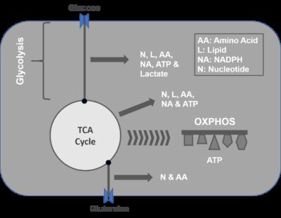 Glucose Process